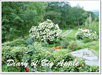 庭の景色も
