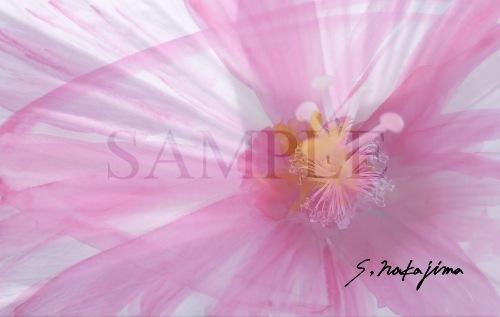 flower012b.jpg