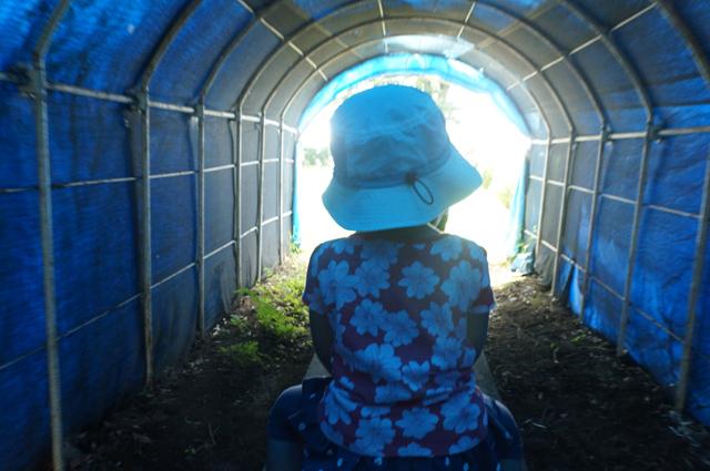 青いトンネルを抜けて