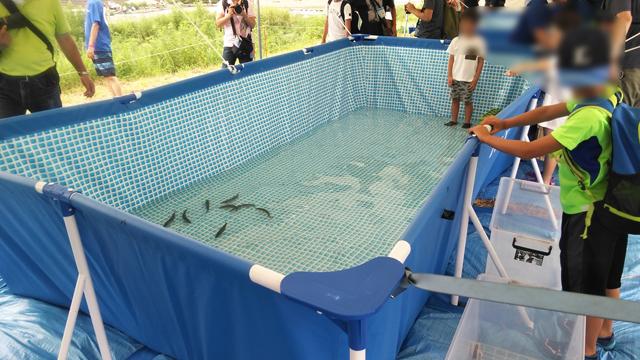 鮎祭の鮎掴みのプール