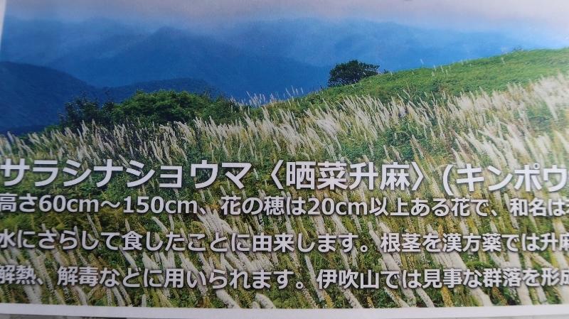 25サラシナショウマ03 (800x449)