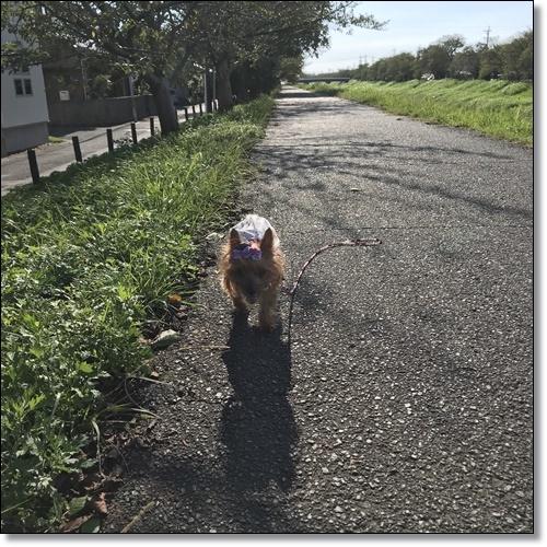 スイング甲子園IMG_6426-20180928