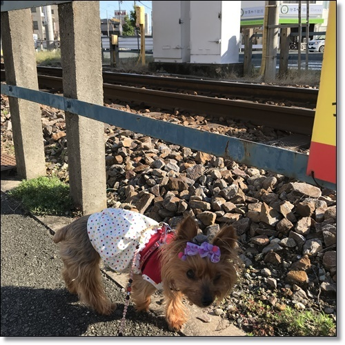 スイング甲子園IMG_6427-20180928