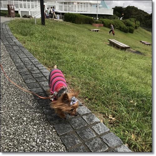 浜松へIMG_6508-20181006