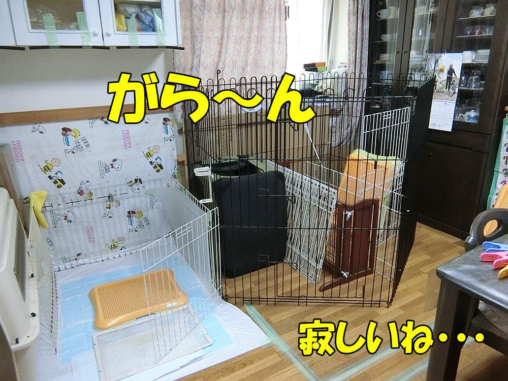 CIMG0569.jpg