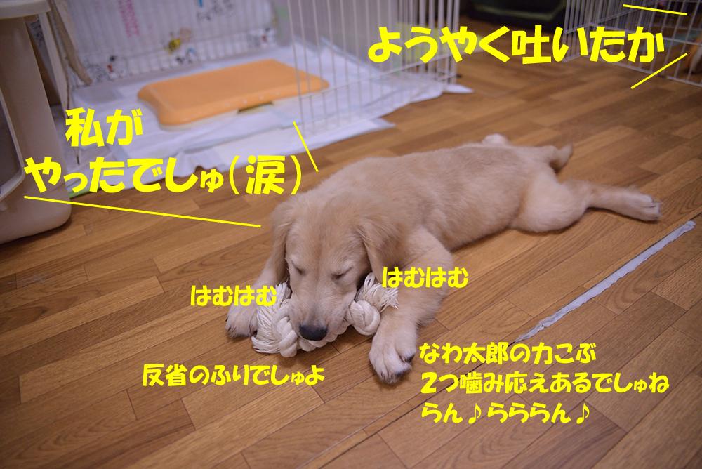 DSC_4676-1000px.jpg