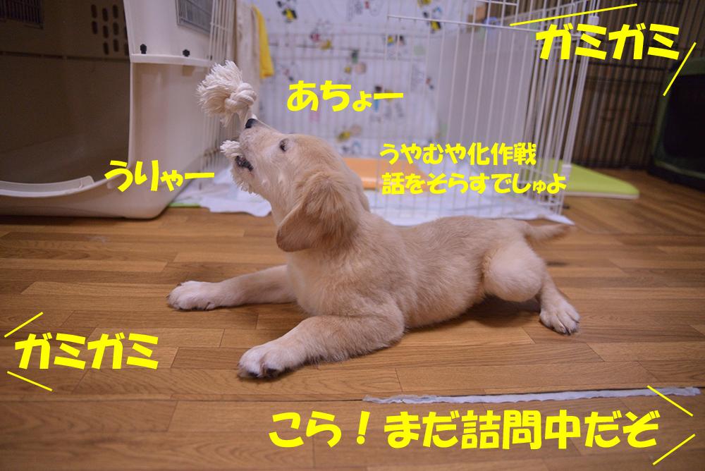 DSC_4682-1000px.jpg