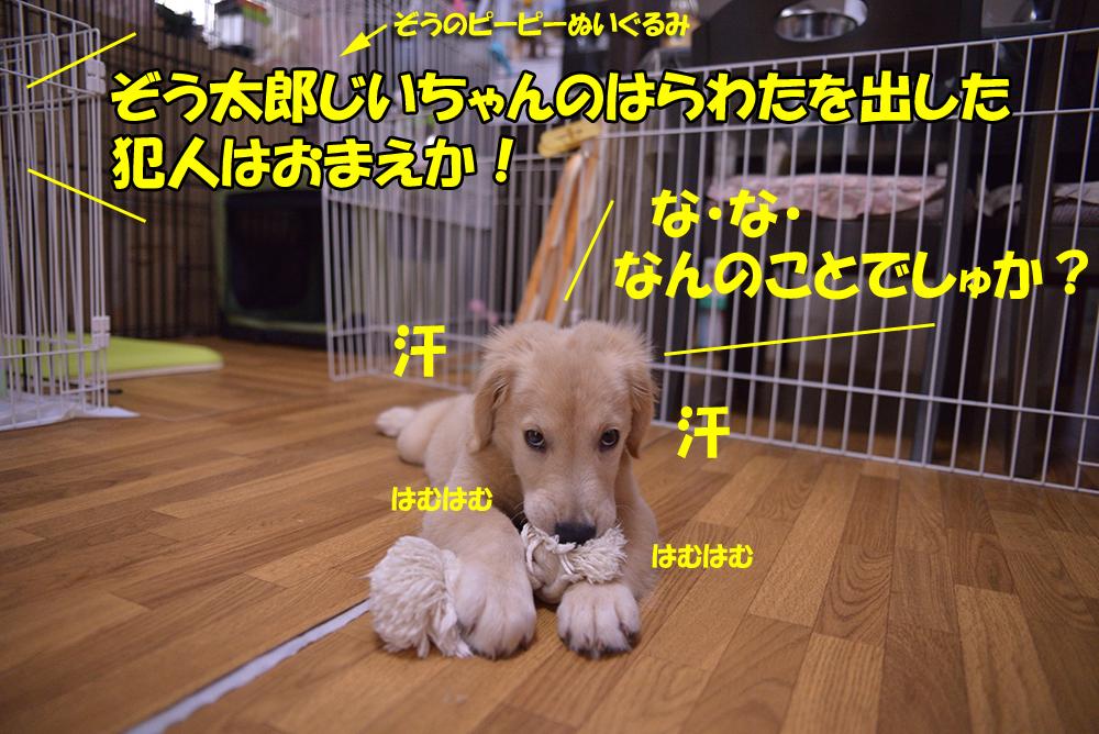 DSC_4684-1000px.jpg