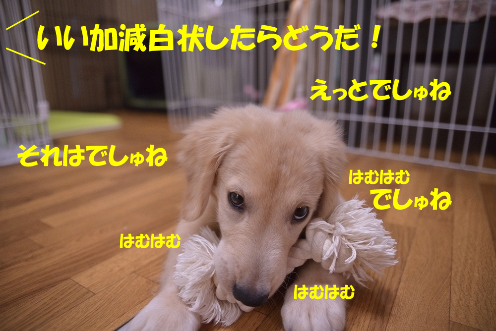 DSC_46861000px.jpg