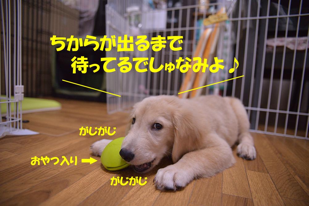 DSC_4696-1000px.jpg