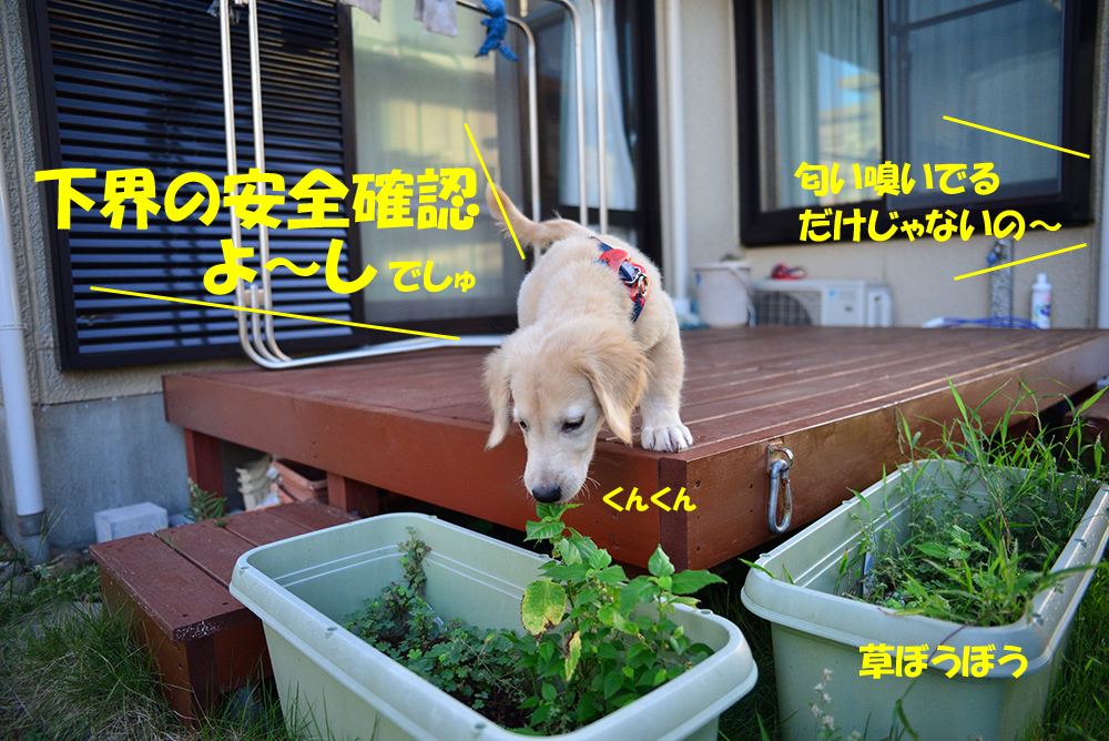 DSC_4778-1000px.jpg
