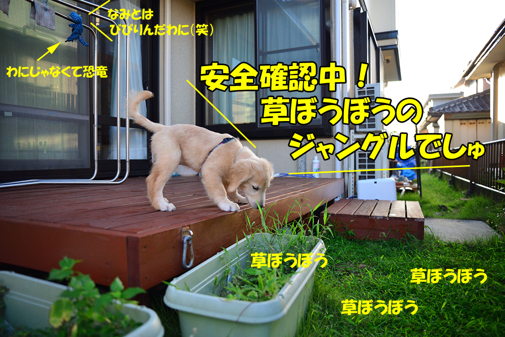 DSC_4784-1000px.jpg