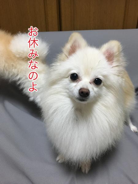 IMG_0242blog.jpg