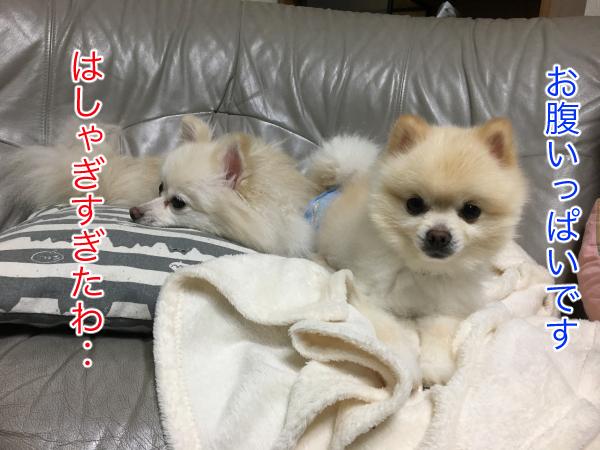 IMG_0316blog.jpg