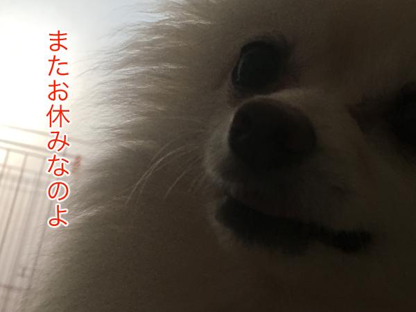 IMG_0355blog.jpg