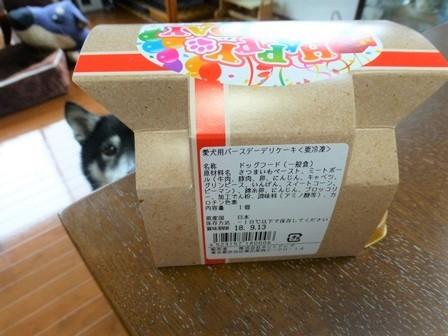 愛犬用バースデーデリケーキ (1)