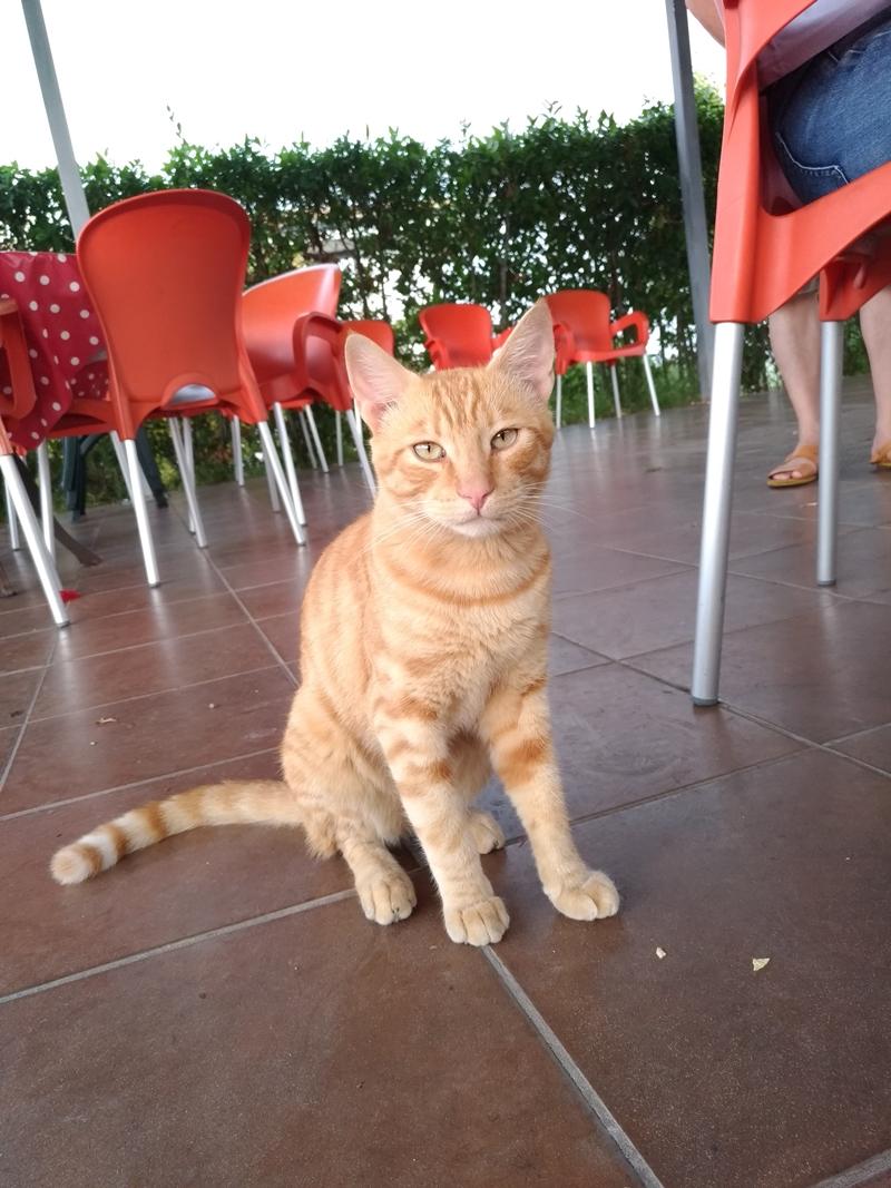 P_20180823_162333(ToRoma_cat2).jpg