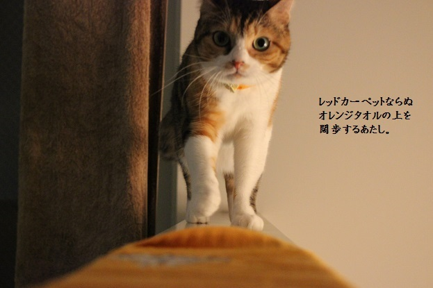 IMG_2354.jpg