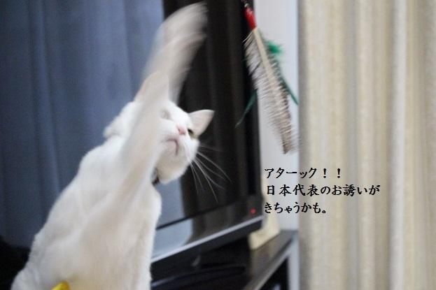 IMG_2388.jpg