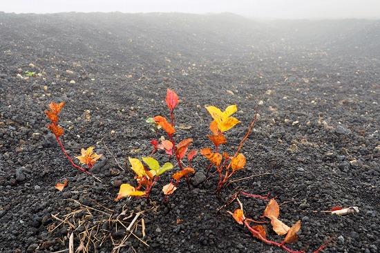 砂礫と紅葉