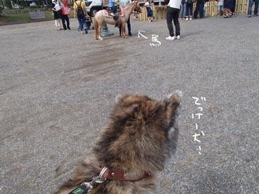 動物フェス1