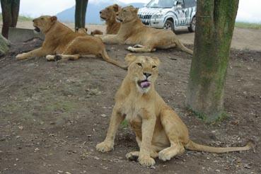 若ライオン3