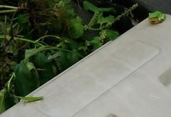 カエルねらう (2)