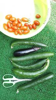 夏野菜収穫2 (1)