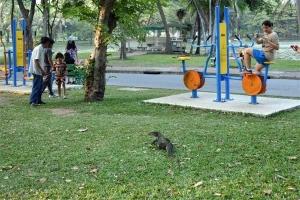 Monitor lizard, Lumpini Park, Bangkok Thailand