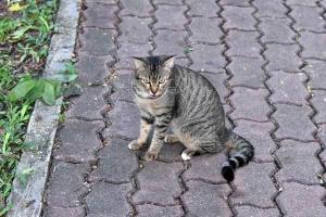Cats of Lumpini Park, Bangkok Thailand