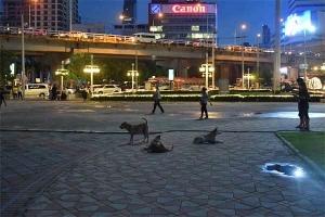 Dogs, Lumpini Park, Bangkok Thailand