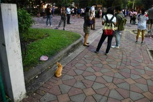 Pokemon Go Players, Lumpini Park, Bangkok Thailand