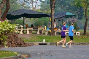 Runners, Lumpini Park, Bangkok Thailand (Cat Looking On)