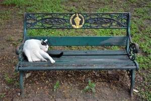 Bench Cat, Lumpini Park, Bangkok Thailand