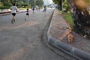 Runners, Lumpini Park, Bangkok Thailand (Cat eating food)