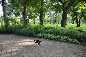 Cat, Lumpini Park, Bangkok Thailand