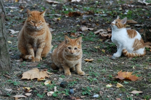 Chappy The Cat (center)
