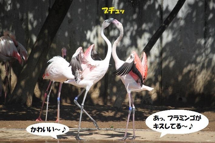 53 - コピー