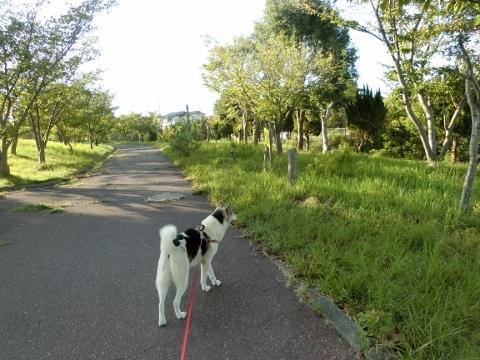 2018-08-27 散歩 003 (480x360)