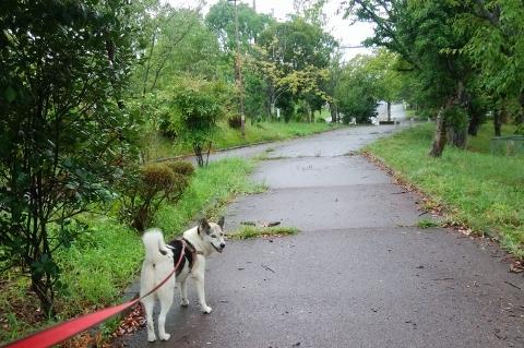 2018-09-01 散歩 003 (480x319)