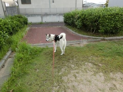 2018-09-06 散歩 003 (480x360)