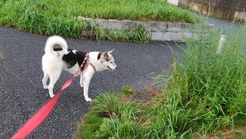 2018-09-09 散歩 006 (480x272)