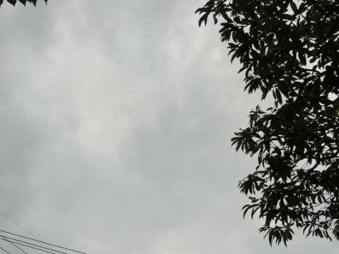 2018-09-13 ジャム作り 006 (480x360)