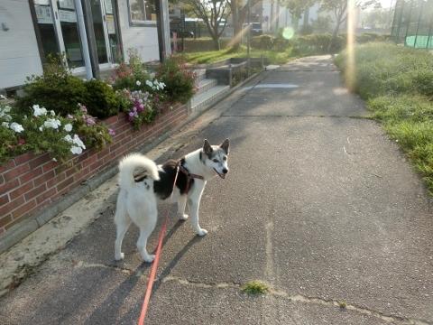 2018-09-18 散歩 004 (480x360)