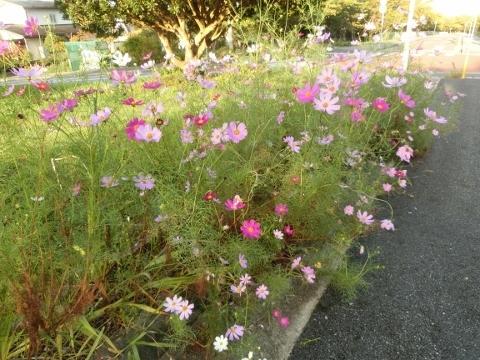 2018-09-26 散歩 001 (480x360)