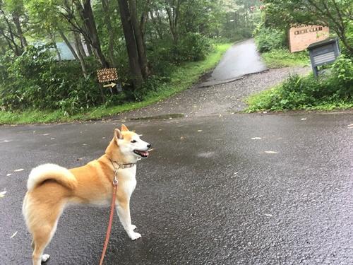 黒姫高原ログコテージさくら泊