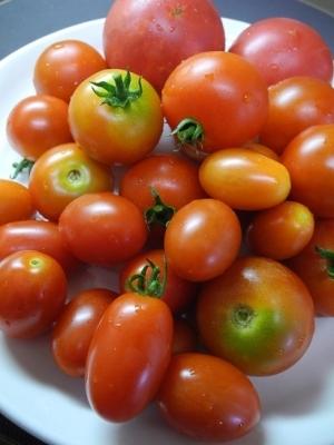20180808差し入れトマト