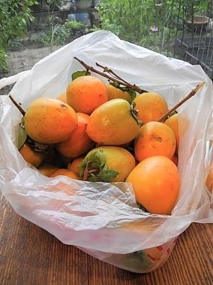 20181009ミョウタン柿➀