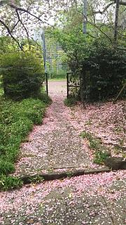 20180415芝公園(その3)