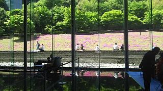 20180422芝桜(その7)